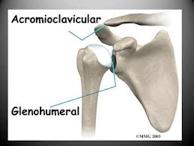 articulacion acromioclavicular01
