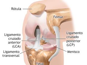 ligamento02
